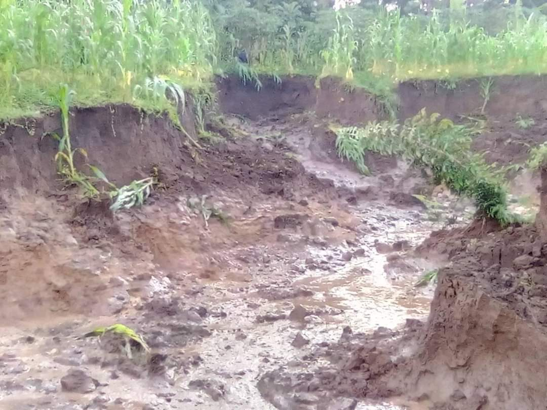 Crops destroyed by landslide (Photo by Rogers Woliama)